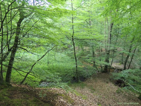 Bergige Landschaft im Schlaubetal