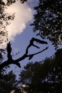 Skurriler Baum im Grunewald