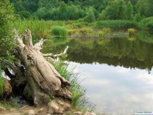 Teich im Naturschutzgebiet Sandgrube im Grunewald Foto: Carsten Böttcher