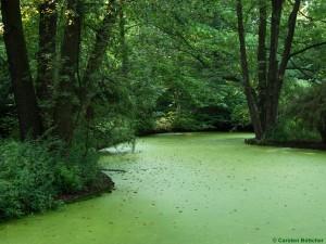 Kleine Wasserlinse im Tiergarten Foto: Carsten Böttcher