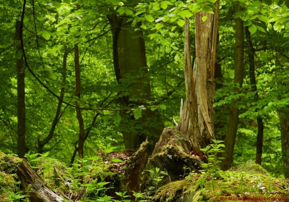 Top Mit-Mach-Wald in Brandenburg @NM_71