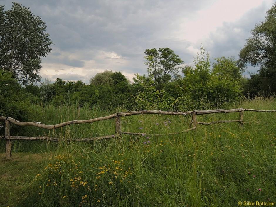 Artenvielfalt im Naturschutzpark Marienfelde Foto: Silke Böttcher