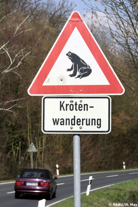 Krötenwanderung Warnschild