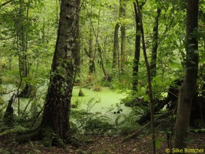 Naturschutzgebiet Zarth