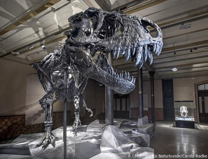 "Tyrannosaurus rex ""Tristan Otto"""