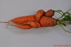Bizarres Gemüse