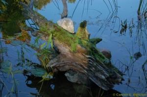 Teich im Ökowerk